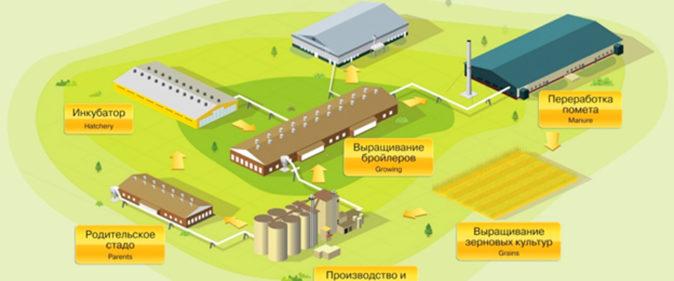 Создание птицеводческого комплекса по производству мяса бройлеров