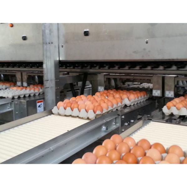 Яйцесортировальная машина Nabel MEX (20 000 - 30 000 яиц/ час)